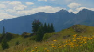 Mountain meadow with flowers video