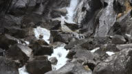 Mountain River among Rocks video
