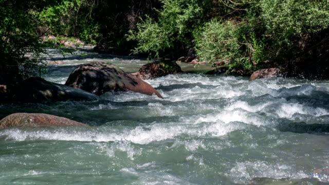Mountain River Hidden in the Bush video