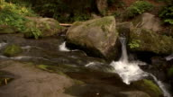 Mountain river in forest video