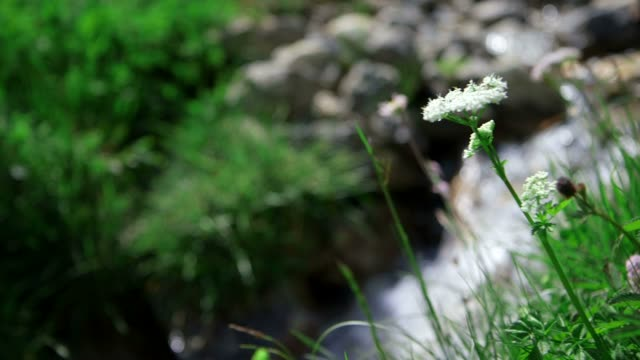 Mountain river in summer video
