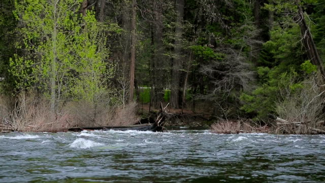 Mountain river in the wooded area video