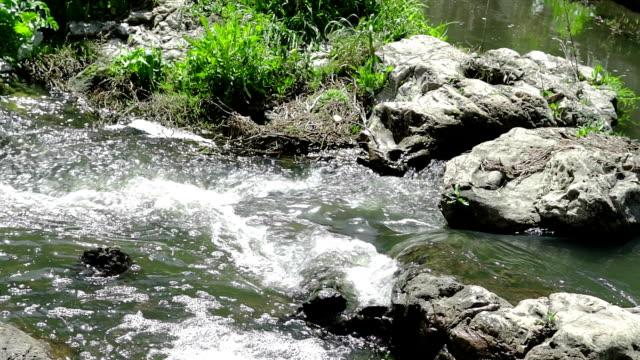 mountain stream at daylight video