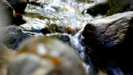 Mountain stream - brook video