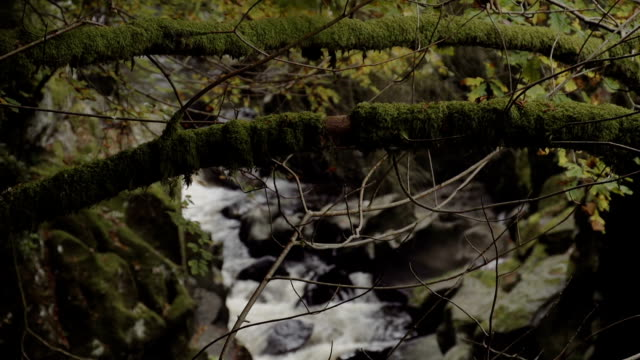 Mountain Stream Deep In The Wilderness Rack Focus video