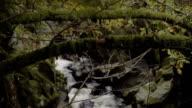 Mountain Stream Deep In The Wilderness Rack Focus video