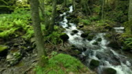Mountain stream in the forest video