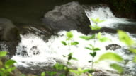 Mountain stream river video
