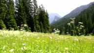 Mountain view in the Bavarian Alps, Germany video
