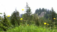Mountain view with flowers in the foreground video