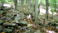 Mountain wood video