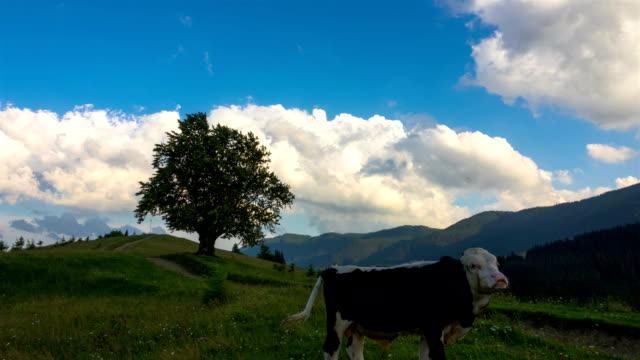Mountainous Landscape with a Lonely Tree and Walking Cows video