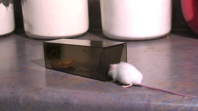 Mouse Trapped video