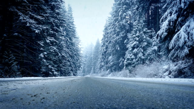 Moving Across Forest Road In Snowfall video