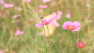 Moving of Pink Flower video