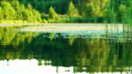 Moving on the water surface of the forest lake in summer evening video