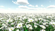 moving over a field of daisies video
