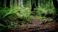 Moving Over Trail In Beautiful Woodland video