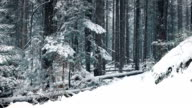 Moving Past Forest Path In Snowfall video
