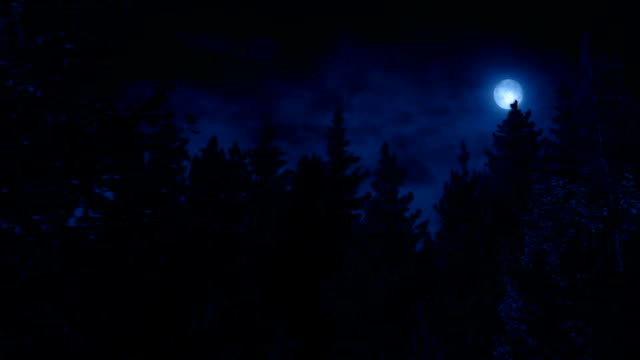 Moving Past Trees At Night With Moon video