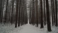 Moving quickly down long trail of symmetrical pines in the winter, ronin stabilized shot video