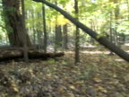 Moving Quickly Through Forest video