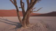 4K moving shot of dead trees in Dead vlei inside the Namib-Naukluft National Park video