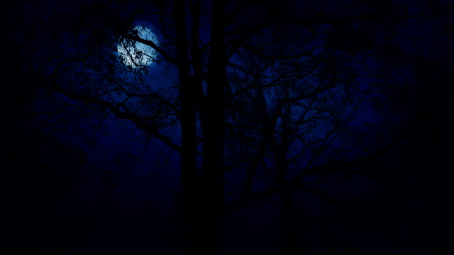 Moving Slowly Past Trees With Moon Above video