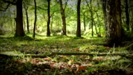 Moving through a lush green forest floor video