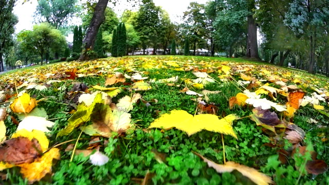 Moving through in meadow autumn video