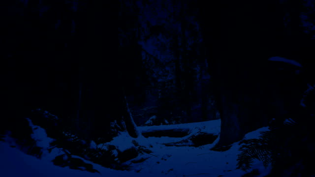 Moving Through Snowy Forest At Night video