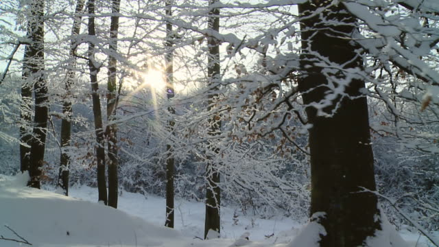 HD SLOW MOTION: Moving Through Winter Forest video