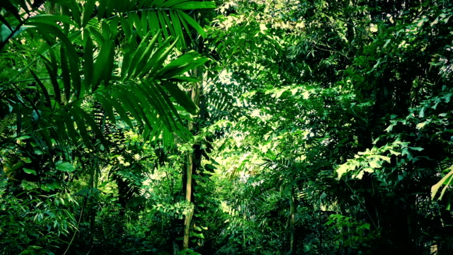 Moving Under Dense Jungle Canopy video
