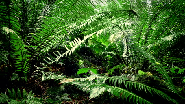 Moving Under Ferns In Forest video