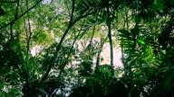 Moving Under Jungle Plants At Sunrise video