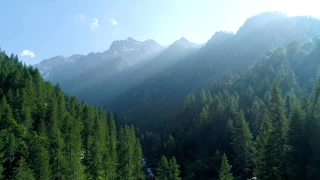 moving up away above pine woods forest and mountain valley with sun flare in summer.Europe Italy Alps outdoor green nature scape mountains wild aerial establisher.4k drone flight establishing shot video