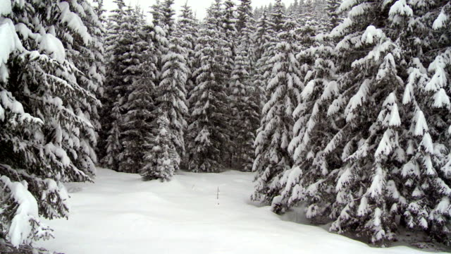 Moving Up Through Winter Forest video
