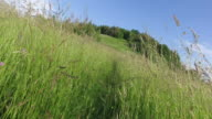 Moving with the camera between high grass in the summer meadow. At the end glade on a hill. video