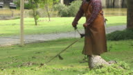 Mowers in the park video