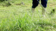 Mowing the grass video