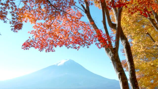 Mt. Fuji and fall leaves video