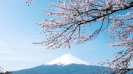 Mt. Fuji with cherry blossom video