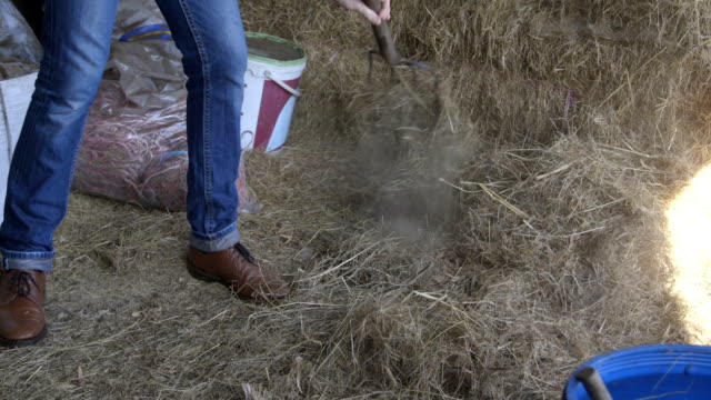 Mucking out the stables video