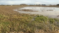Mud and Water Pastureland Flood video