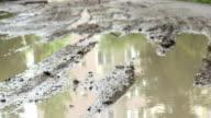 Muddy Road video