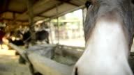 mule video