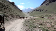 Mules Running in Aconcagua Valley, Argentina video