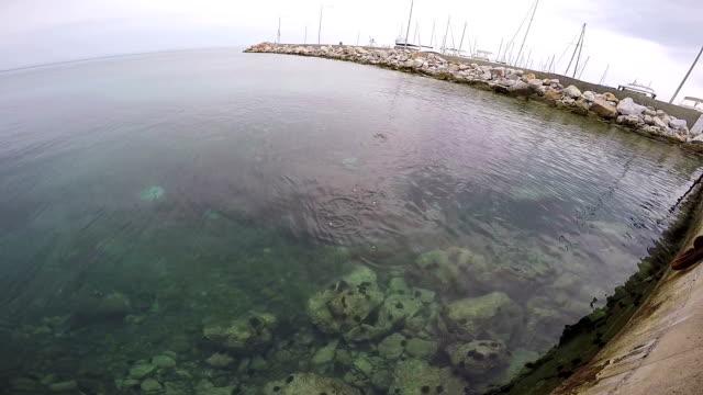 Mullet fish video