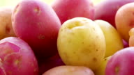 multicolored potatoes of different varieties video