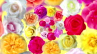 Multicolored spiral of turning roses. video